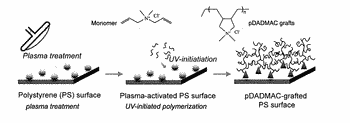 Cationic polymer systems for selective bacterial capture
