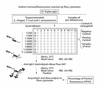 Differential diagnostic method and kit for infectious and parasitic diseases, using flow cytometry
