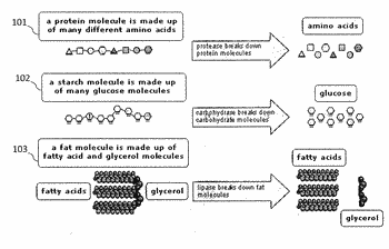 Enzyme fortified foods; add-ons, suspended and coated processes