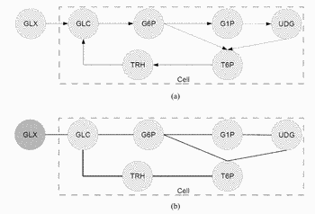 Systems and methods for causal inference in network structures using belief propagation