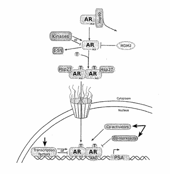 Combination therapies and methods of use thereof for treating cancer