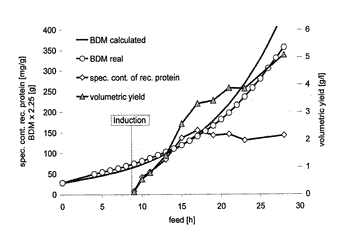 Method for producing a recombinant protein on a manufacturing scale