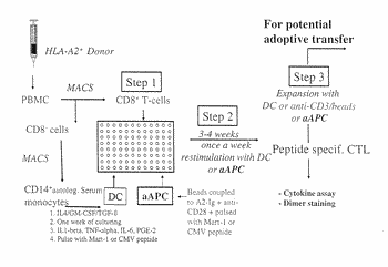 Reagents and methods for engaging unique clonotypic lymphocyte receptors
