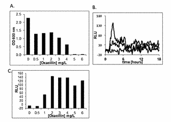 Methods and compositions for bacteria infections