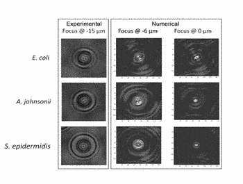 Method for identifying biological particles using stacks of defocused holographic images