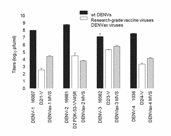 Compositions and methods for dengue virus chimeric constructs in vaccines