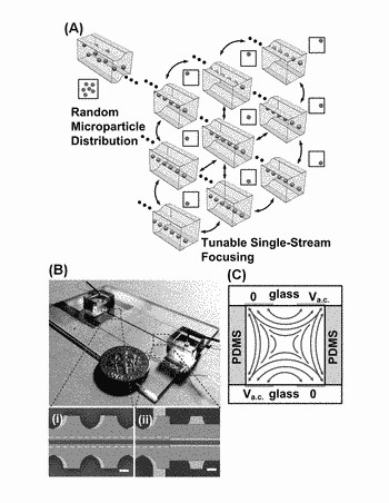 Tunable, sheathless, and three dimensional single-stream cell focusing and sorting in high speed flows