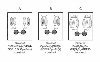 Growth differentiation factor 15 (gdf-15) polypeptides