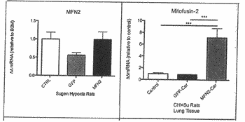 Methods for increasing the selective efficacy of gene therapy using car peptide and heparan sulfate ...