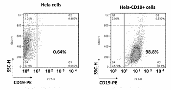 Adherent cancer cell line expressing a hematological tumor antigen