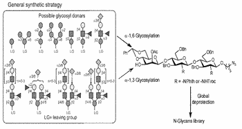 Methods for modular synthesis of n-glycans and arrays thereof