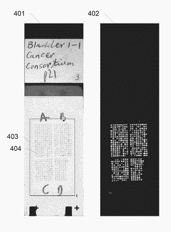 Systems and methods for area-of-interest detection using slide thumbnail images