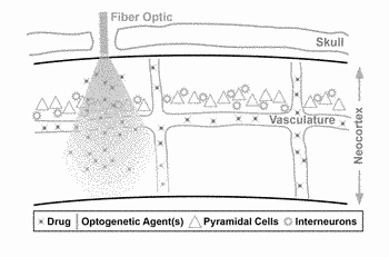 Optogenetic control of endothelial cells