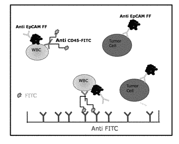 Molecular characterization of circulating tumor cells