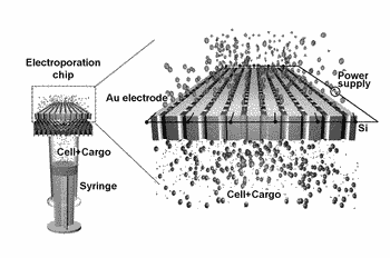 Device for massively parallel high throughput single cell electroporation and uses thereof