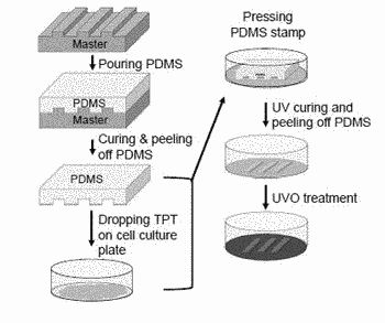 Culture scaffold for enhancing differentiation of osteoblast using pattern
