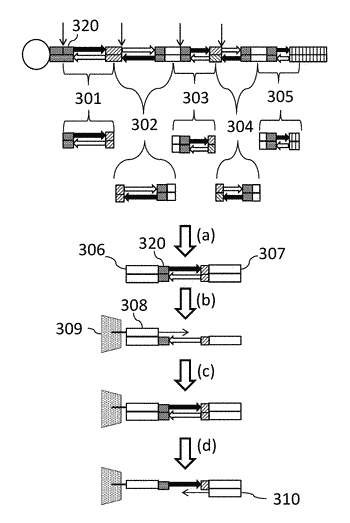 Methods for constructing consecutively connected copies of nucleic acid molecules