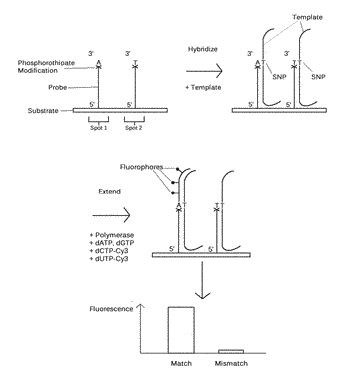 Reusable microarray compositions and methods