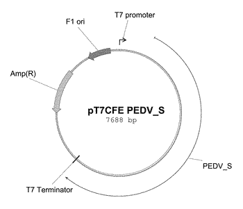 Whole expressed cell as antigen carrier, and use thereof in preparing vaccine or diagnostic agent, ...