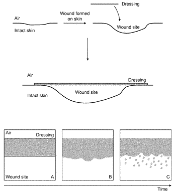Composition comprising collagen and honey