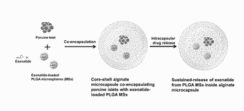 Capsules with intracapsular microspheres for improved survival and function of encapsulated cells