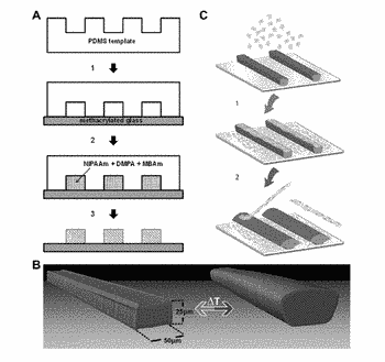 Cell culture substrate for rapid release and re-plating