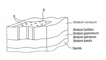 Transdermal therapeutic system for the administration of peptides