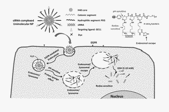 Unimolecular nanoparticles for efficient delivery of therapeutic rna