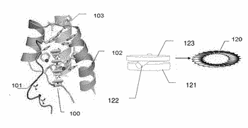 Nanobiomimetic memtransformer apparatus and an application in energy-sensory images thereto