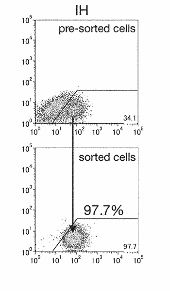 Hepatocytes and hepatic non-parenchymal cells, and methods for preparation thereof