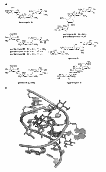 System and methods for detecting ribosome inhibition