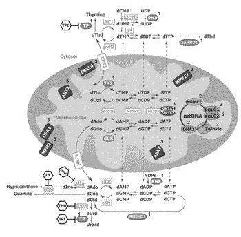 Treatment of mitochondrial diseases